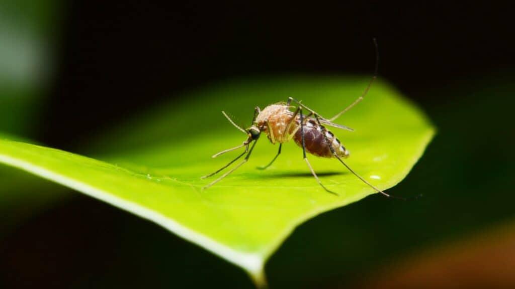 Muggenbeten voorkomen